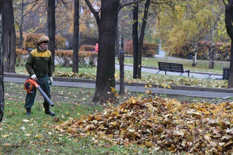 Граждане города проголосовали зарегулярную уборку осенней листвы