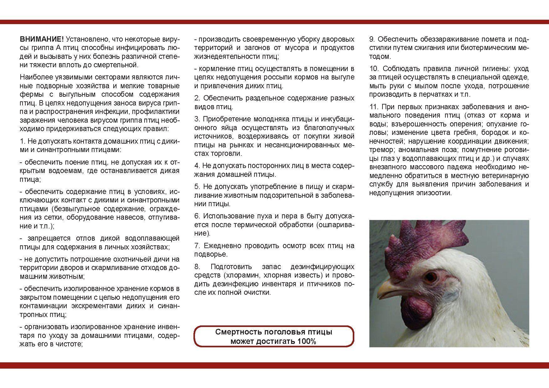 отчет в фонд занятости о принятых работниках бланк 5-пн